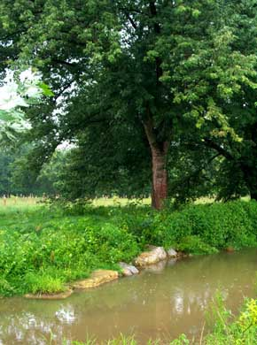 streambank with well developed vegitation