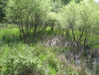 Picture of wetland
