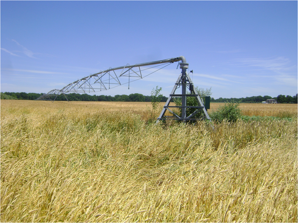 Spray Irrigation System in Worton, Maryland
