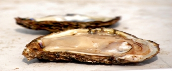 Maryland's Current Shellfish Advisories